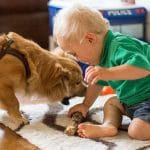 The High Costs of Dog Bites to Children